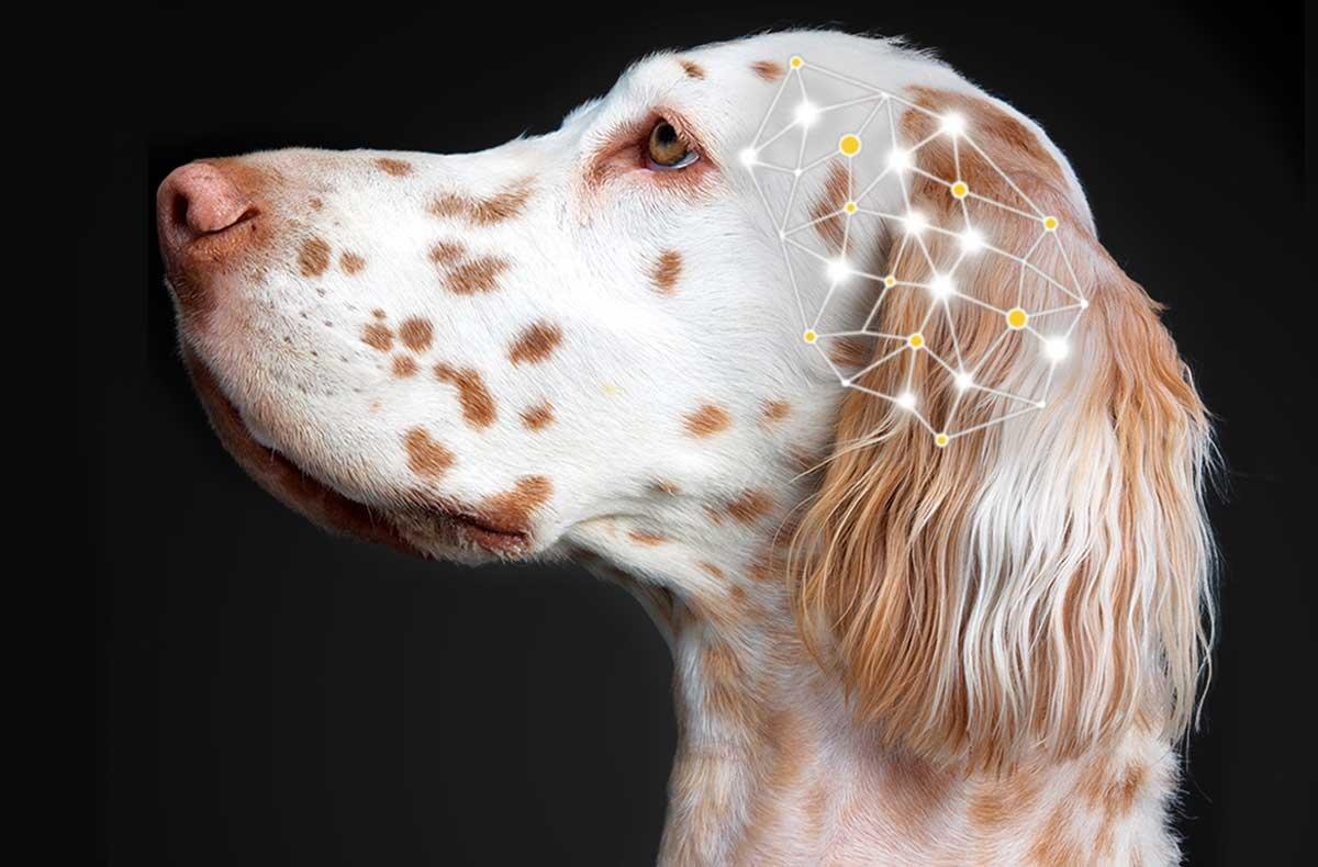 cbd oil dogs epilepsy